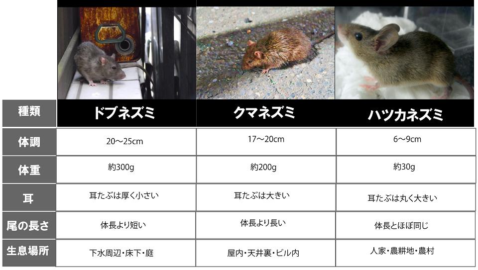 住宅被害ネズミ種類